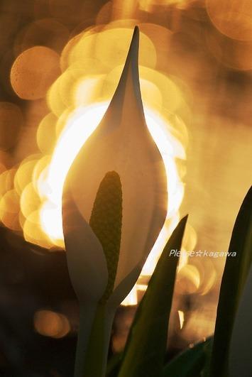 気軽に♪気軽に♪春の香り・・・☆仙台泉中央ヘア プリーズ☆