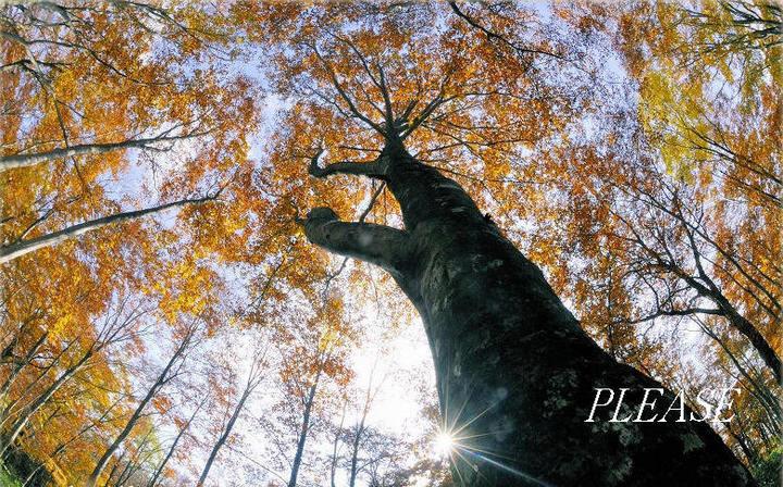 天空の樹☆ヘア スタイリスト クラブ プリーズ泉中央理容美容