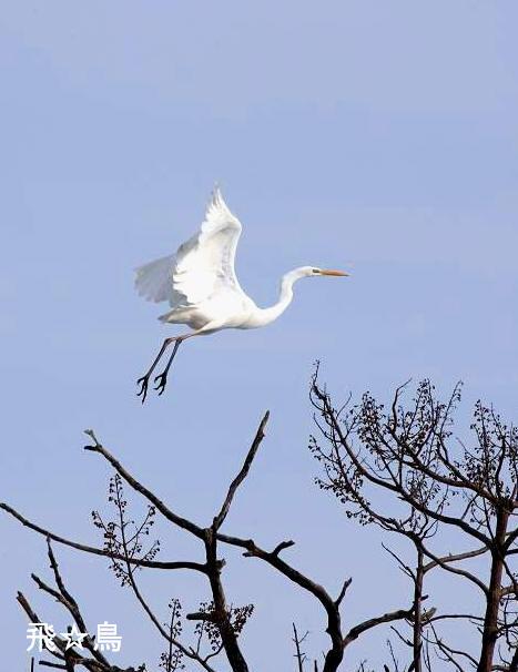 飛☆鳥 145