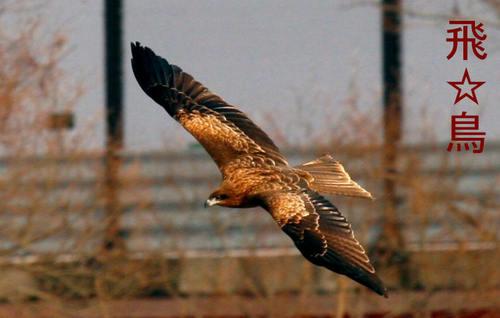 飛☆鳥138