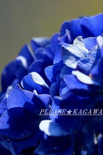 紫陽花ブルー☆   泉中央カット&パーマ プリーズ☆加川