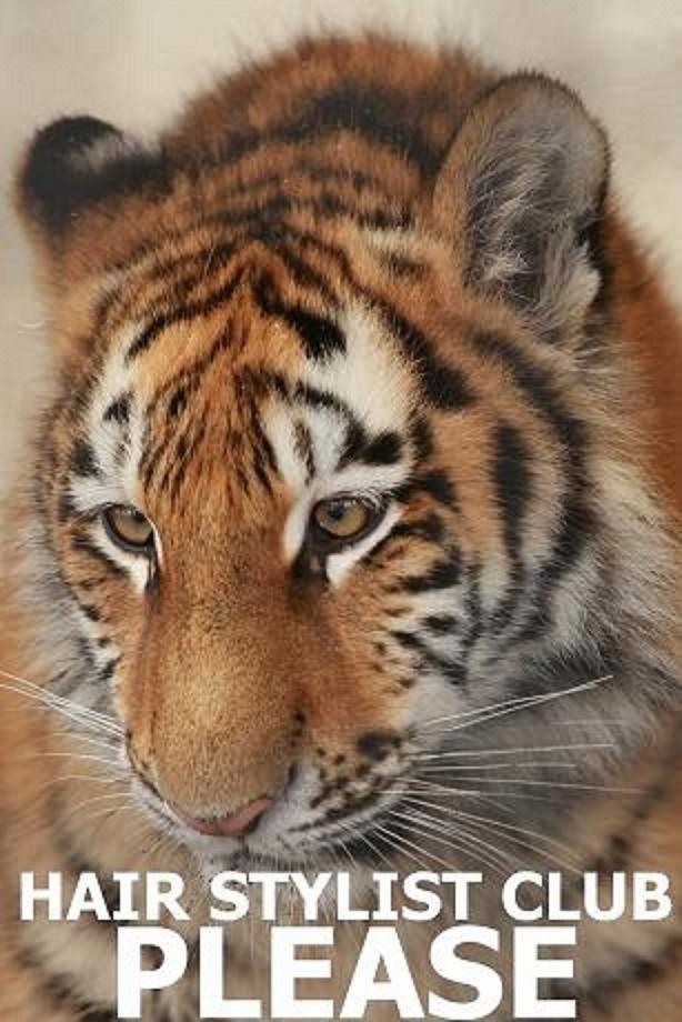 虎&タイガー2009年プリーズ☆加川NEWS