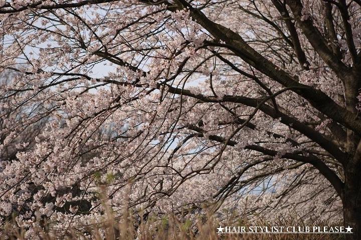 桜の泉区将監交番前☆  ヘアスタイリストクラブプリーズ