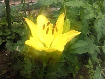 奇麗に咲いた!