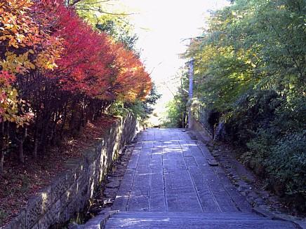 紅葉風景 ~亀井邸・東参道・勝画楼~ 11月23日(月)