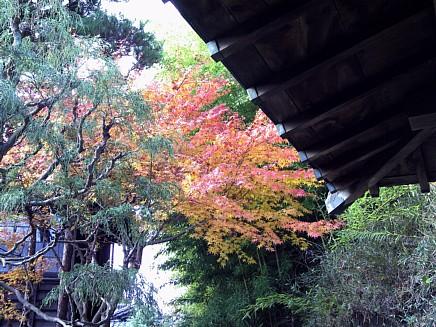 紅葉風景 ~亀井邸・東参道・勝画楼~ 11月24日(火)