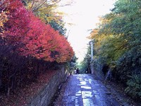 紅葉風景 ~亀井邸・東参道・勝画楼~ 11月25日(水)