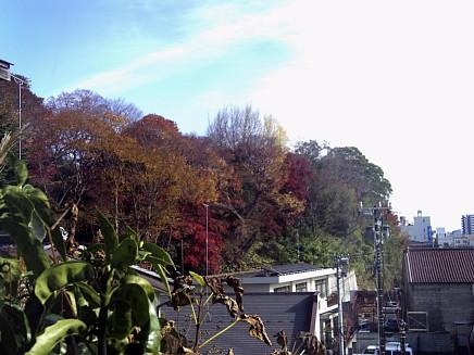 紅葉風景 ~亀井邸・東参道・勝画楼~ 11月27日(金)