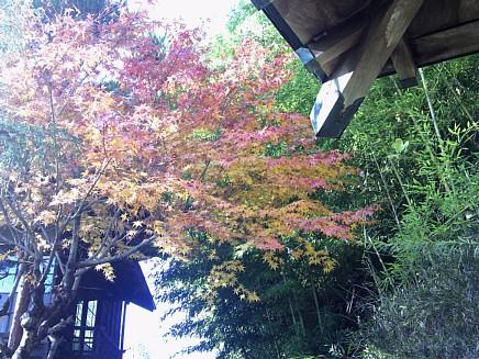 紅葉風景 ~亀井邸・東参道・勝画楼~ 11月30日(月)