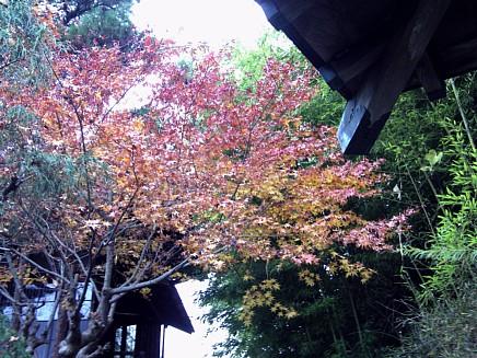 紅葉風景 ~亀井邸・東参道・勝画楼~ 12月3日(木)