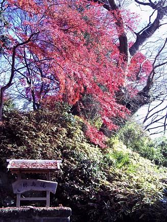 紅葉風景 ~亀井邸・東参道・勝画楼~ 12月4日(金)
