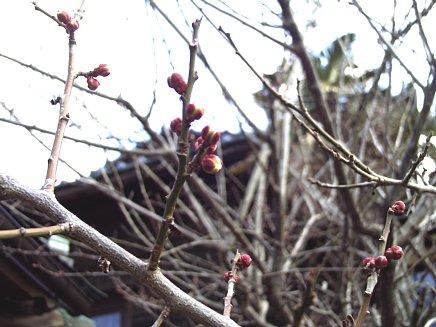 春の足音?