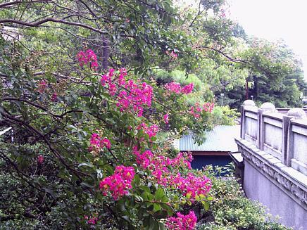 亀井邸より、残暑お見舞い申し上げます。