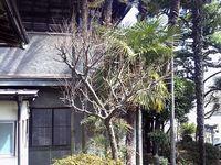 亀井邸からのお知らせ ~修繕工事による臨時休館のご案内~