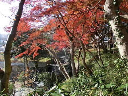 紅葉風景2012 ~まとめ~