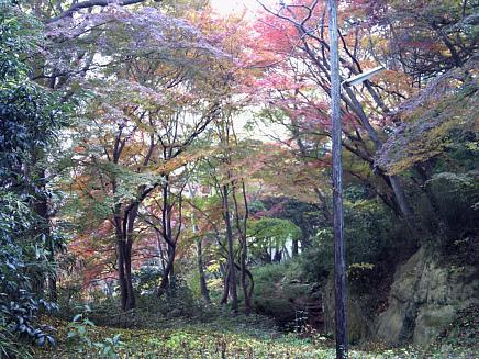 紅葉風景2011年版~亀井邸・勝画楼・東参道~