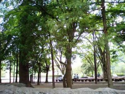 いま仙 勾当台公園