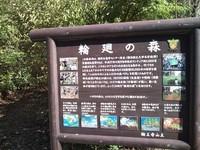 今朝の散歩(北山 輪王寺)