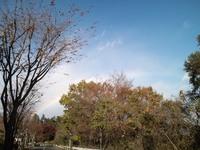 今日の散歩(賀茂神社付近)