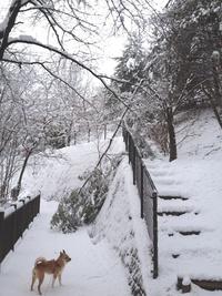 昨日の散歩(うどう沼公園)
