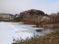 今朝の散歩(丸田沢堤)