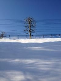 今朝の散歩(川平北公園)