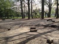 今朝の散歩(西公園)
