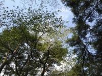 日曜日の散歩(水の森公園)