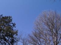 上杉公園の樹's