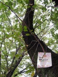今朝の散歩(北三番丁公園)