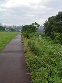 今朝の散歩♪