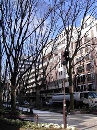 今日の散歩(定禅寺通)