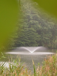 今朝の散歩(うどう沼公園)