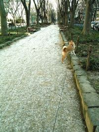 今朝の散歩