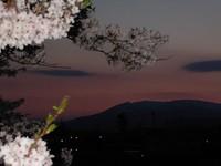 一目千本桜(ライトアップ)