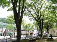 今朝の散歩(定禅寺通)
