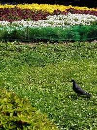 今朝の散歩(勾当台公園)