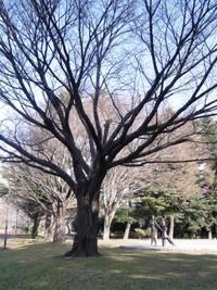 仙台市 西公園♪