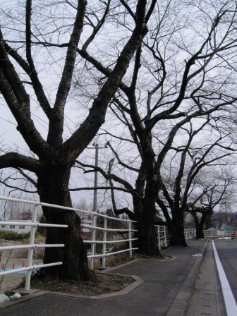 校内外の樹's