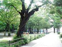 今朝のお散歩:仙台