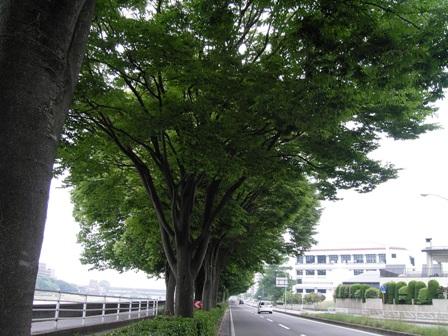 仙台市 太白区 根岸付近