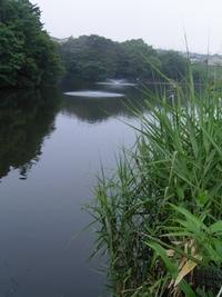 うどう沼公園:続き