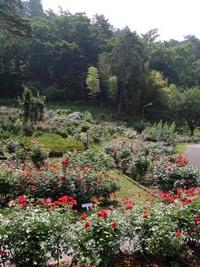 東沢バラ公園:縦♪
