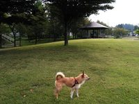 大石田 桂桜公園