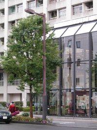 今朝の散歩(雨の定禅寺通り)