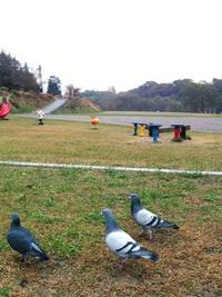 今朝のお散歩Ⅱ