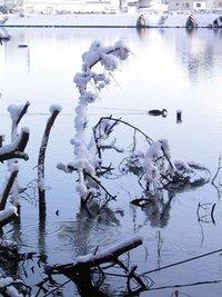雪の「うどう沼公園」