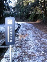 今朝の散歩(三の丸付近)
