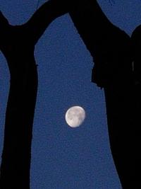 昨夜の月と