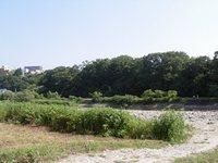 今朝の散歩(牛越橋付近)